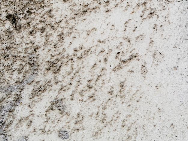 Priorità bassa di struttura della parete del cemento con il lichene