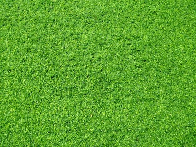 Priorità bassa di struttura di erba artificiale