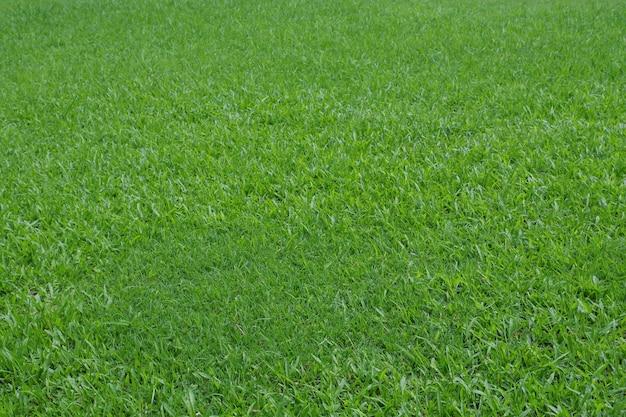 Priorità bassa di struttura di erba verde.