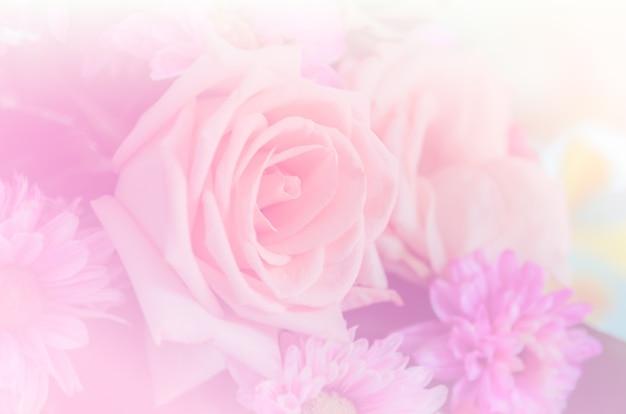 Priorità bassa dolce dei fiori della rosa di rosa