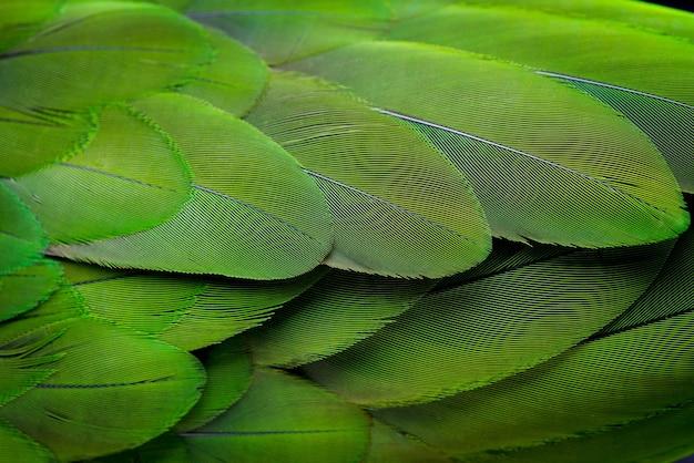 Priorità bassa e struttura della piuma verde.
