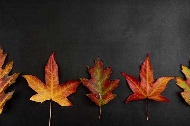 Priorità bassa, struttura o bordo di autunno delle foglie di colore variopinte.