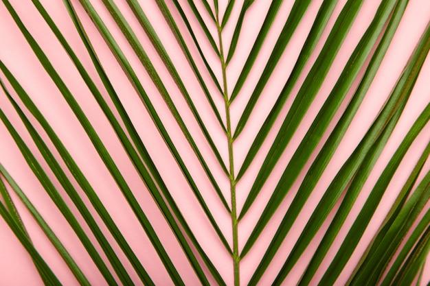 Priorità bassa verde delle foglie di palma con lo spazio della copia. vista dall'alto