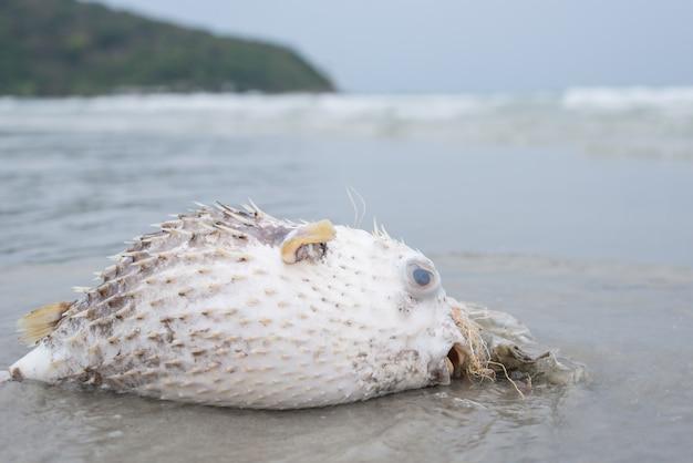 Problema di inquinamento plastico, pesce palla di morte sulla spiaggia con immondizia di plastica sporca
