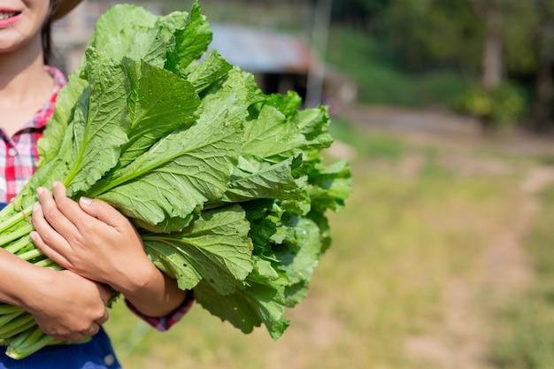 Prodotti agricoli per la raccolta.