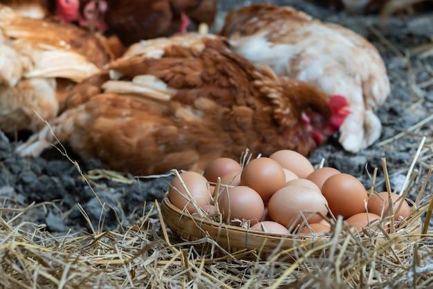 Produci uova di pollo fresche da galline nella fattoria.
