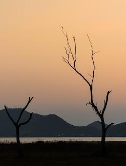 Profili l'albero e il lago asciutti con la montagna in cielo del tramonto