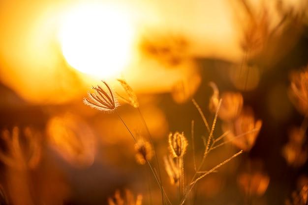 Profili l'erba sull'estate del bello paesaggio del tramonto sul tramonto.