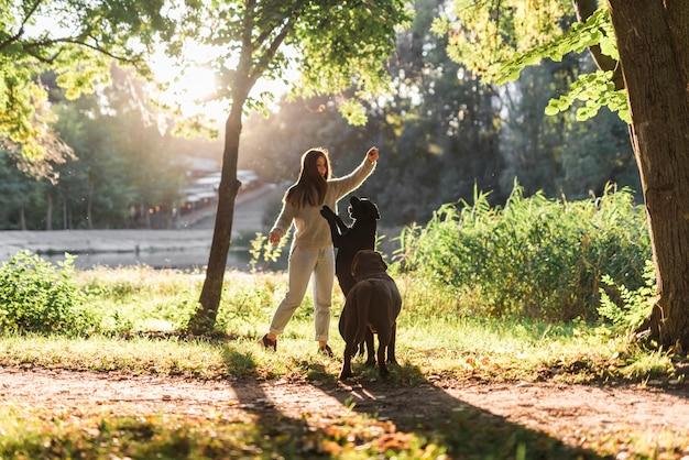 Proprietario di animale domestico femminile con due cani che giocano con la palla nel parco
