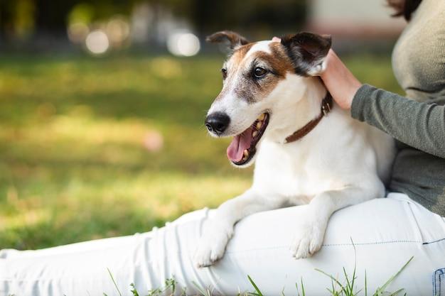 Proprietario petting cane nel parco