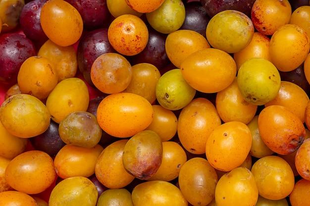 Prugne fresche, frutta sana e biologica.