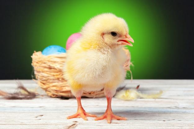 Pulcino con le uova di pasqua sul tavolo di legno
