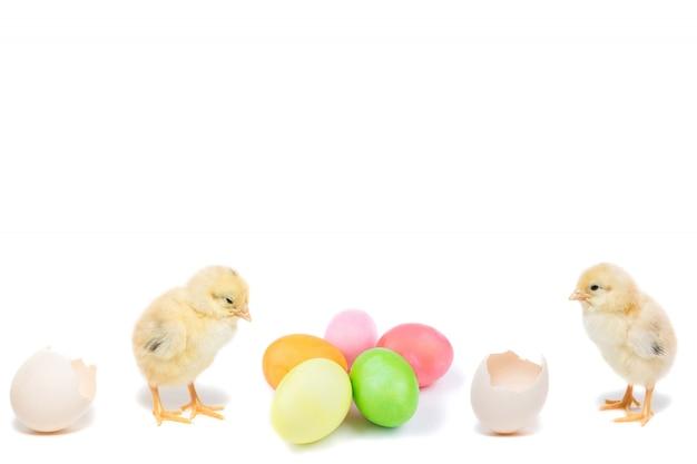 Pulcino di pasqua e uova dipinte