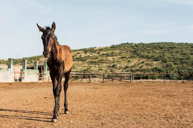 Puledro cavallo in piedi in un ranch