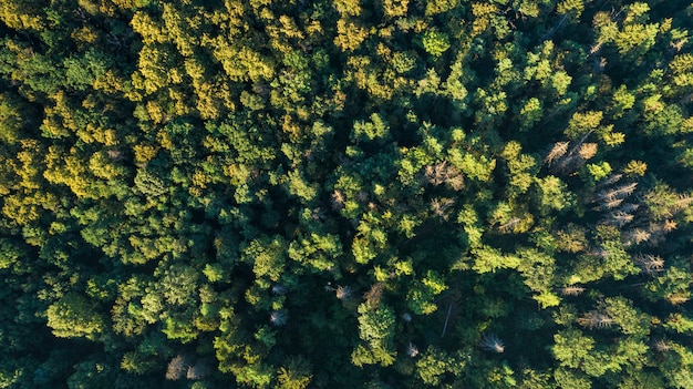 Punto di vista aereo drone aerea.