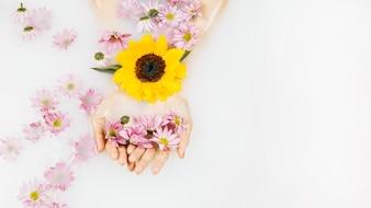 Punto di vista dell'angolo alto della mano di una femmina con i fiori gialli e rosa in chiara acqua bianca