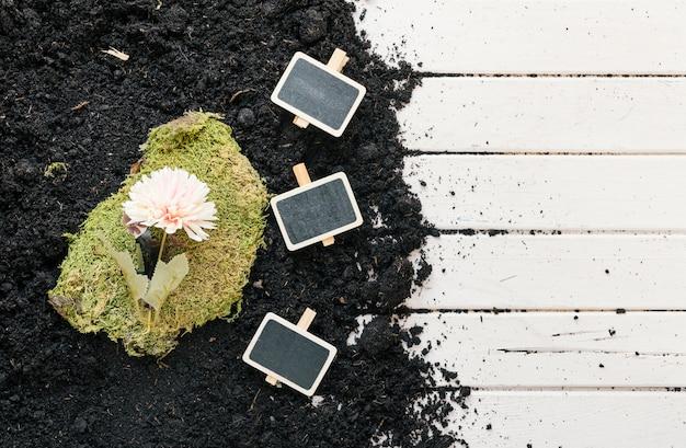 Punto di vista dell'angolo alto del fiore su tappeto erboso con il cartello nero su sporcizia sopra il banco di legno