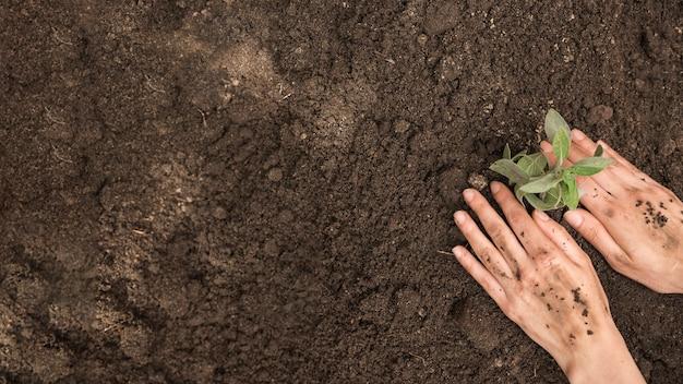 Punto di vista dell'angolo alto della mano umana che pianta giovane pianta fresca in suolo