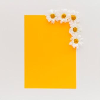 Punto di vista dell'angolo alto di carta in bianco arancio con i fiori della margherita bianca su fondo bianco