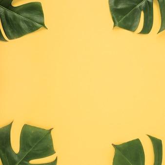 Quattro foglie di monstera su sfondo giallo