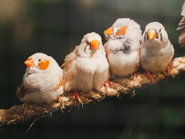 Quattro uccellini che si siedono sulla corda sul fondo del bokeh. animale, uccello, amore, concetto di famiglia.