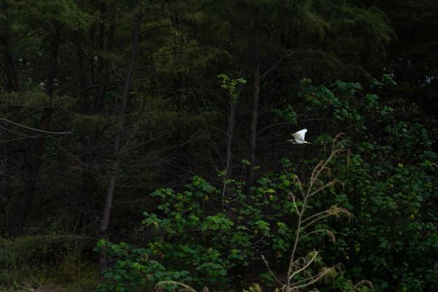 Quell'uccello acquatico che vola nella foresta