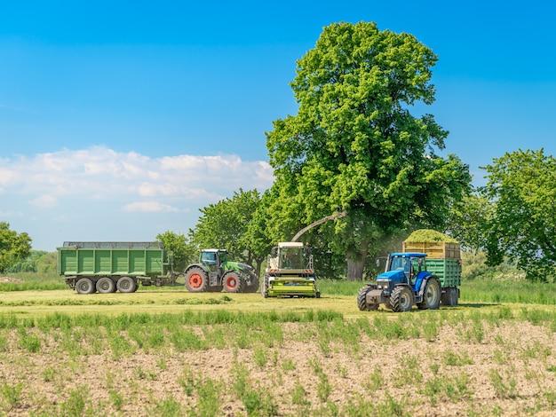 Raccolta del fieno dal campo con l'aiuto di una mietitrebbia e di un trattore