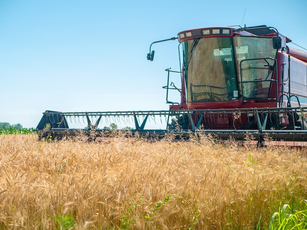 Raccolta del grano in estate. mietitrice rossa che lavora nel campo. mietitrice della macchina agricola del raccolto maturo dorato del grano sul campo.