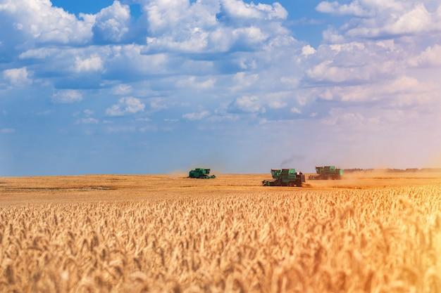 Raccolta del grano la mietitrice rimuove il grano sul campo