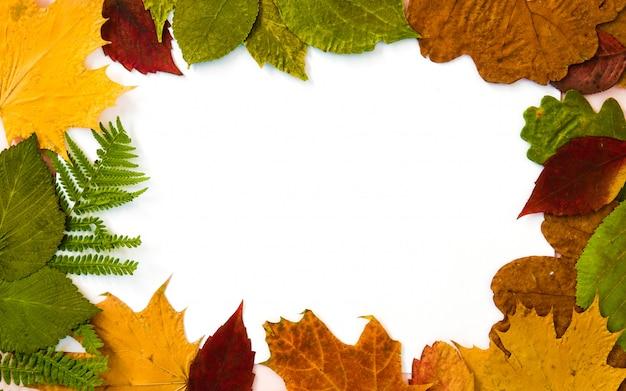 Raccolta delle foglie di autunno sulla struttura bianca del fondo