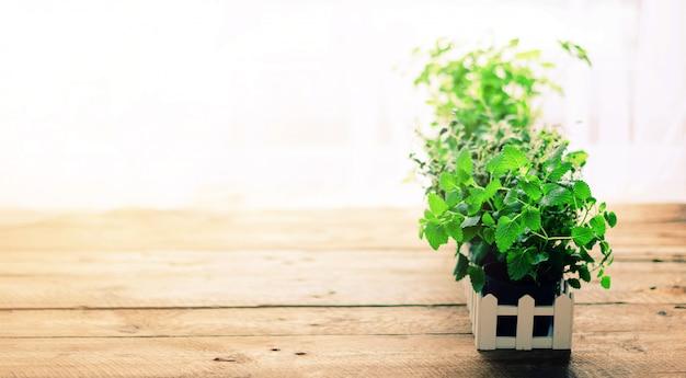 Raccolta di erbe biologiche fresche melissa, menta, timo, basilico, prezzemolo. concetto astratto di primavera o estate.