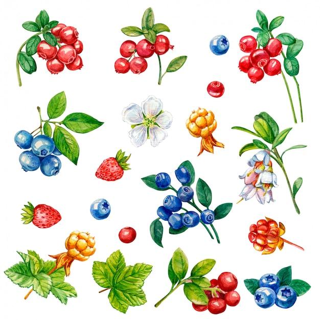Raccolta di frutti di bosco su uno sfondo bianco