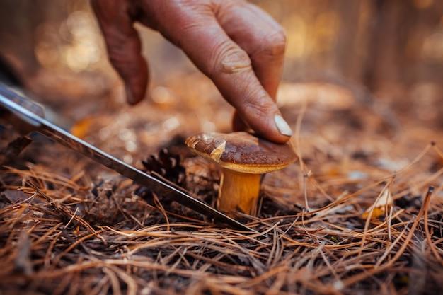 Raccolta di funghi. uomo che taglia fungo polacco nella foresta di autunno. stagione della raccolta dei funghi