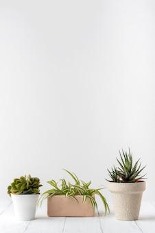 Raccolta di piante vivaci con spazio di copia