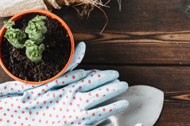 Raccolta di varie piante di casa, guanti da giardinaggio, terriccio e cazzuola su fondo di legno bianco
