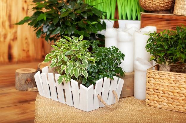 Raccolta di varie piante verdi domestiche in diversi vasi di casa