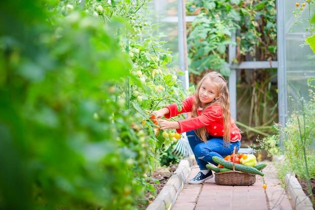 Raccolto in serra. bambina con la raccolta delle verdure