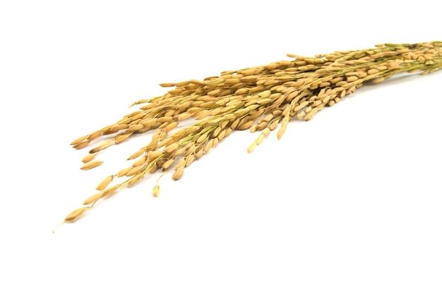 Raccolto nutrizione paglia agricolo