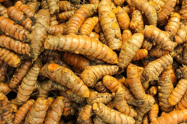 Radice di curcuma nel campo dell'agricoltura