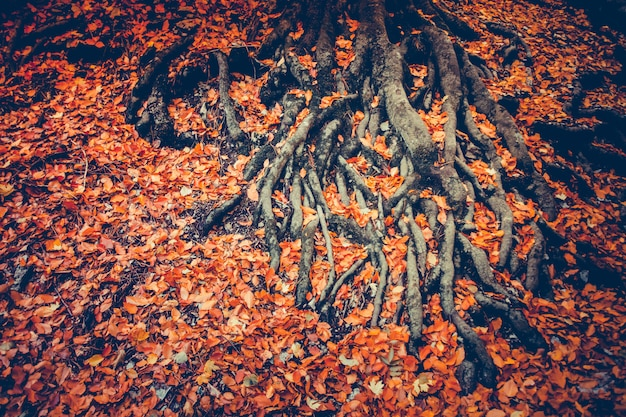 Radici dell'albero con foglie secche