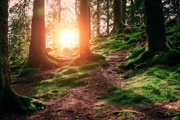 Radici e sole dell'albero in una foresta verde