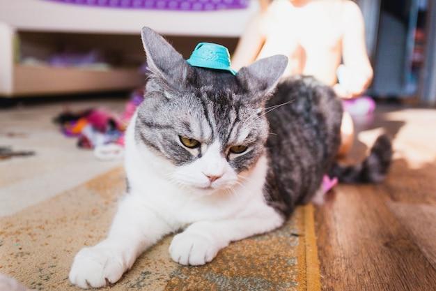Ragazza che gioca con il gatto, animale domestico e la sua padroncina