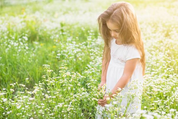 Ragazza che sta nei campi di fiori bianchi