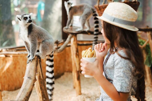 Ragazza che tiene il vetro delle fette della mela che esamina le lemure catta nello zoo
