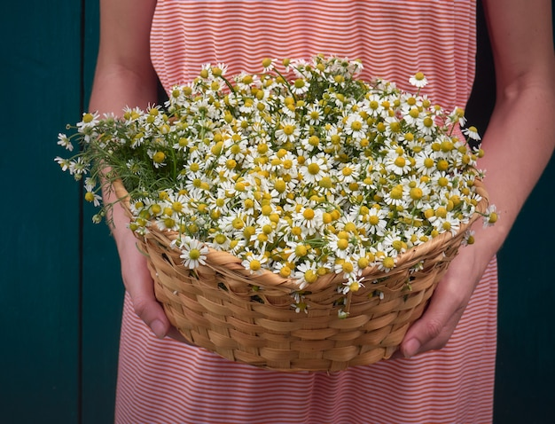 Ragazza con fiori di camomilla.