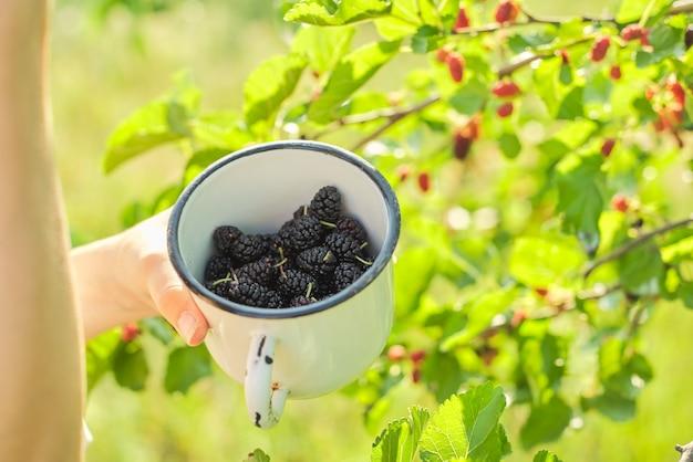 Ragazza con il raccolto delle bacche in tazza, gelso nel giardino di estate