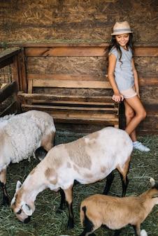 Ragazza felice che esamina le pecore che pascono erba nel granaio