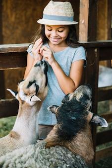 Ragazza sorridente che alimenta le pecore e le pecore nell'azienda agricola