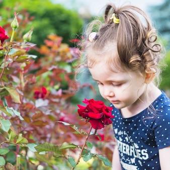 Ragazza sveglia che esamina la rosa rossa nel giardino