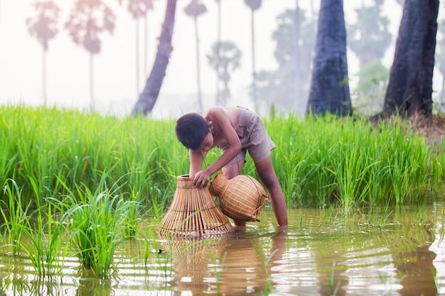 Ragazzino che sta su un giacimento del riso